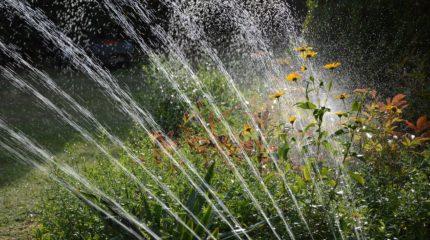Eigene Raspberry Pi Gartenbewässerung mit Webseite bauen